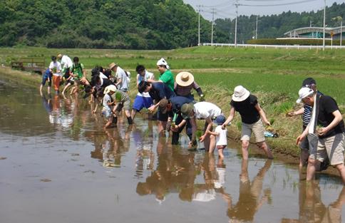 田植え体験プログラムのご案内イメージ