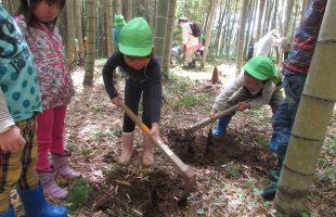 竹の子堀り体験